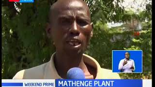 Mathenge Plant causing a headache to Baringo residents