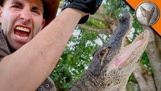 Alligator Bite DAMAGE!