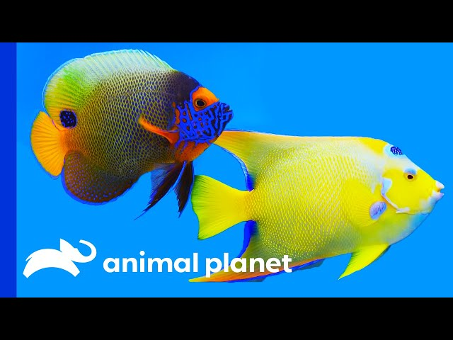 The Prettiest Fish You Can Keep As A Pet | Tanked