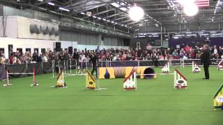 2014 Westminster Kennel Master Agility Championship - Roo! - Jww
