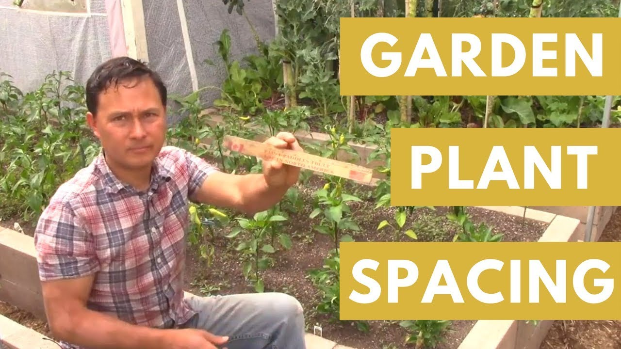 Guidelines For Spacing Vegetable Plants In The Garden For Highest Production