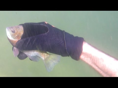 4K CATCHING FISH BY HAND Underwater,Hold My Breath For 3 Minutes: Fishing Herping Nature CA AZ TX FL