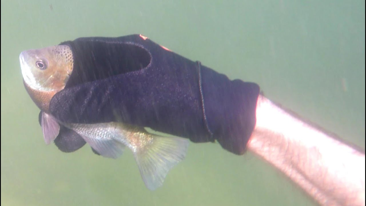 4k catching fish by hand underwater hold my breath for 3 for How do fish breathe underwater