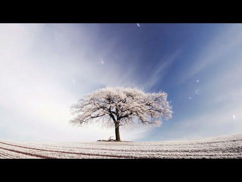 Healing Music - Relax Body & Mind - Beautiful Nature Scenery - Meditation Music - Sleeping Music