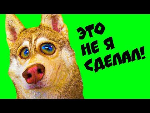 СБОРНИК РЖАЧНЫХ МОМЕНТОВ!! (Хаски Бублик) Говорящая собака Mister Booble