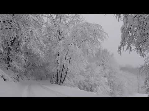 Relaxing Snowfall 2 Hours - Sound of Light Wind Breeze and Falling Snow in Forest (Part 2)