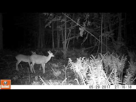 Video of Maine Night Life in the Woods