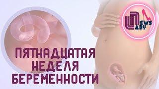 видео 14 - Четырнадцатая неделя беременности: развитие плода, анализы, советы