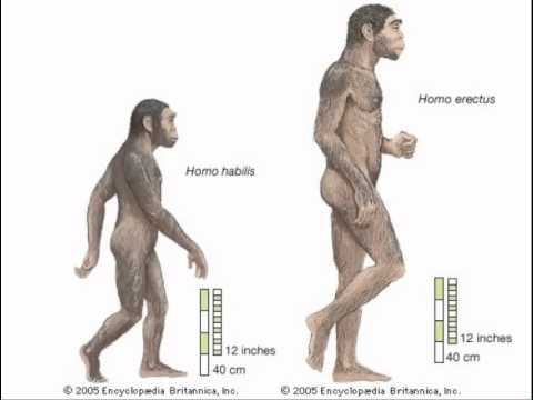 an essay on early hominids and home bases