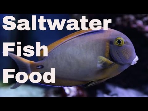 saltwater fish eating
