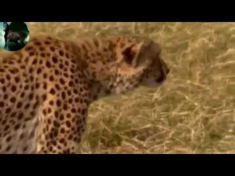WAPBOM COM   Beautiful World    Nature And Animals HD 1080p