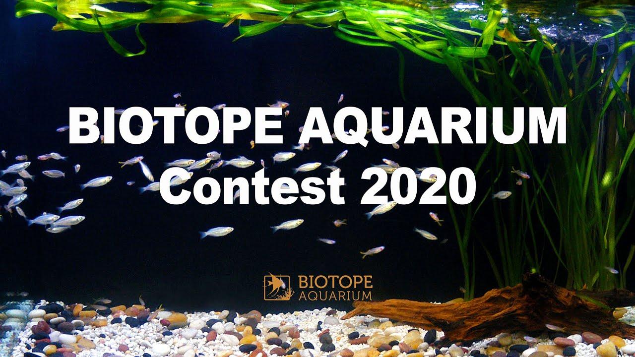 Biotope Aquarium Contest 2020 Youtube