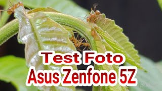 Test Foto : Asus Zenfone 5Z