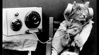 الملحن يخلق الموسيقى فقط للقطط و أنهم يحبون ذلك - اسمع