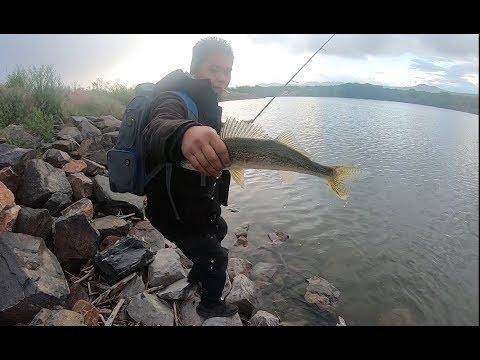 Consistant Walleye Action At A Local Lake In Colorado
