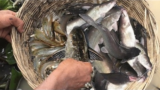 Amazing Net Fishing In Cambodia - Catch Water Snake In Cambodia | Cross Net Fishing Tools #5