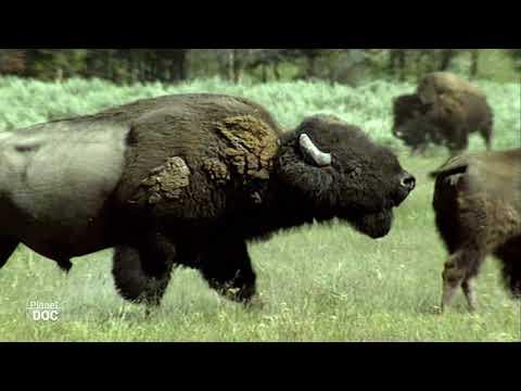 Parque Nacional Yellowstone - Parte 3