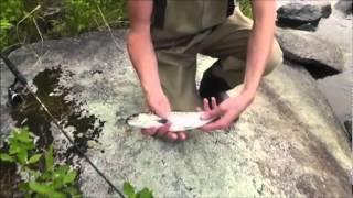 ma2012 penobscot river salmon fishing maine