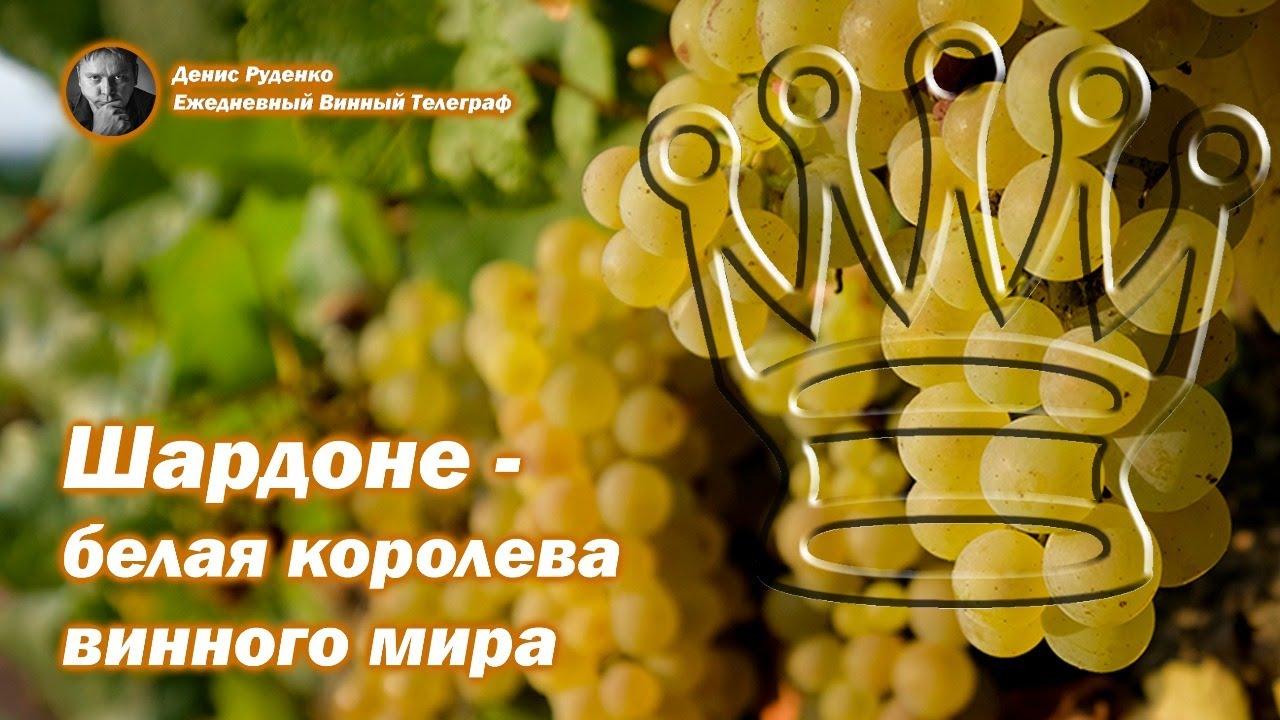 Шардоне - белая королева винного мира