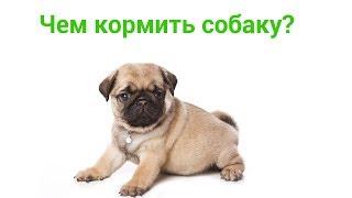 Чем Кормить Собаку & Топ-13 Полезных И Вредных продуктов. Ветклиника Био-Вет