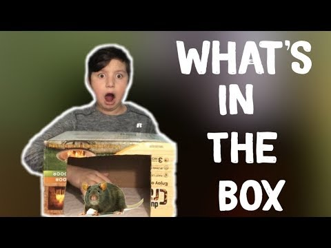 What's In The BOX Challenge  ft. My Little Sister