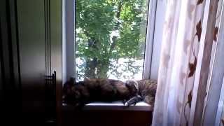 Кошки безмятежные сны!