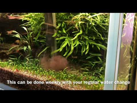 Substrate Cleaning Technique - Aquascaping Tip -  Removal Of Organic Waste/detritus