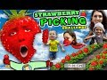KIDS STRAWBERRY PICKING CHALLENGE! Fields of Fun w  FUNnel Family + Play Time! Family Vlog