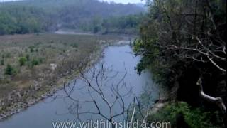 Glimpse of the oldest national park of Inida - Jim Corbett National Park