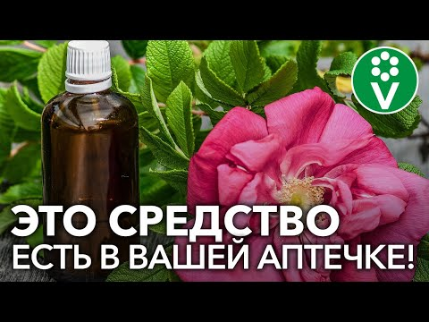 Аптечное лекарство от всех БОЛЕЗНЕЙ РОЗ!