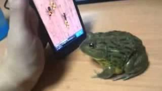 Sapo jugando en Smartphone
