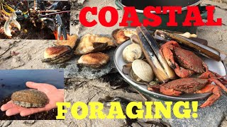 Coastal Foraging , Cook Up On The Beach - Ormers / Abalone , Lobster , Clams and More !