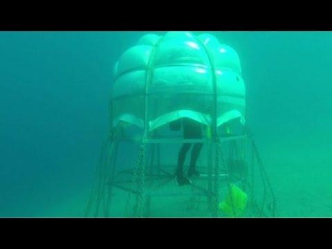 Logran cultivar albahaca bajo el mar