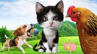 Bé Học Các Con Vật Quen Thuộc Con Mèo, Con Chó, Con Gà, Con Ngỗng