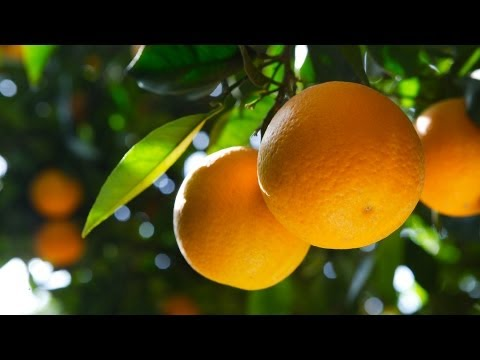 What Makes an Orange a Superfood? | Superfoods Guide