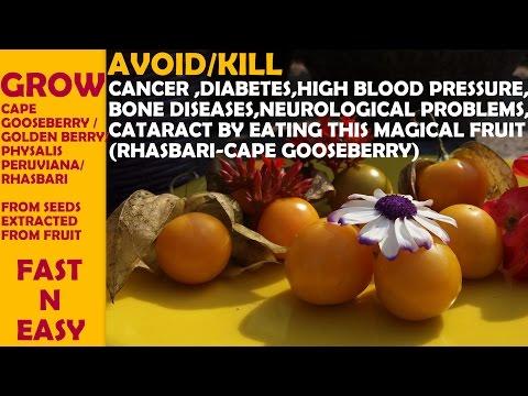 How To Grow Cape Gooseberry/Rhasbari/Physalis Peruviana/Golden Berry From Fuit