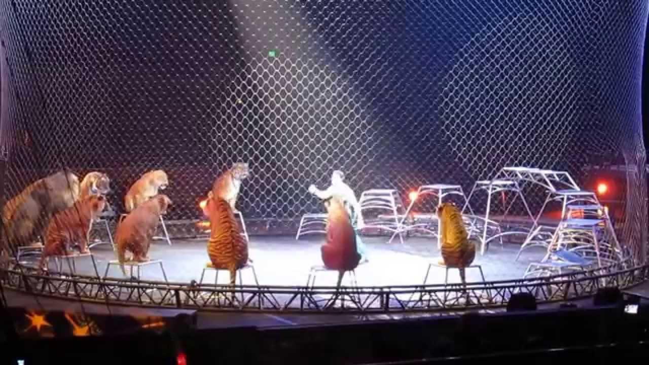 Big Cats Circus Training Abuse