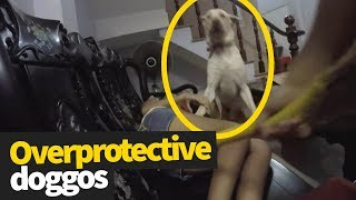 Dogs Being Overprotective Compilation 2019 | Heroic Doggos