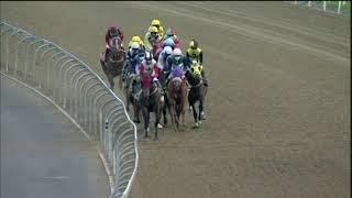 Vidéo de la course PMU PRIX SOCCER ANY 15 MR 79 HANDICAP