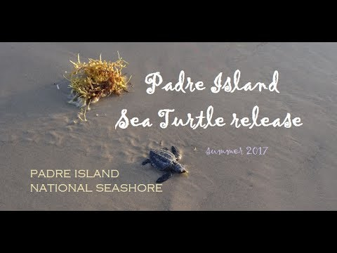 Don't miss the awesome sea turtle release in Padre Island, Texas!  My car got stuck in the sand :-(