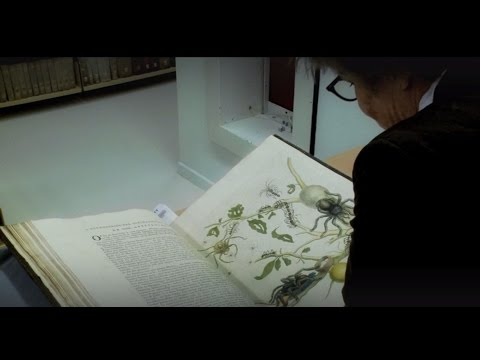 Maria Sibylla Merian - Book: Metamorphosis insectorum Surinamensium 1705