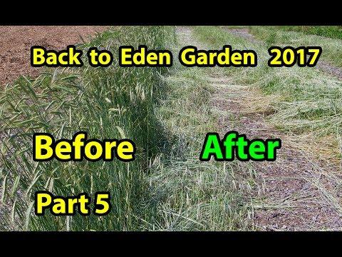 Back to Eden Organic Gardening Method 101 Soil Improvement with Wood Chips Garden Series  Part 5