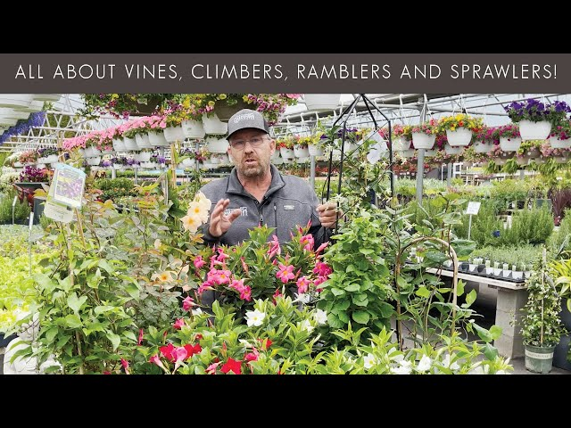 5/5/2021 Learn All About Vines, Climbers, Ramblers and Sprawlers with Sean