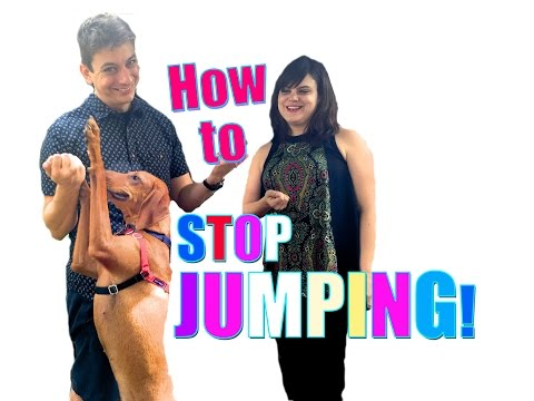 Everything You Need to Know to STOP Your Dog From JUMPING