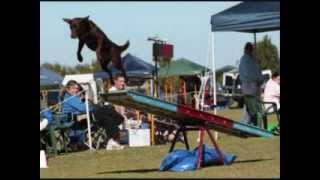 Agility Dog Trials Perth Finals Day