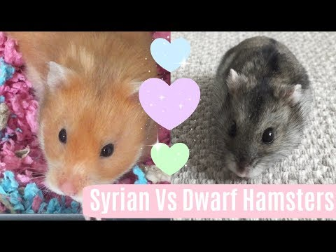 Syrians Vs Dwarfs | Differences