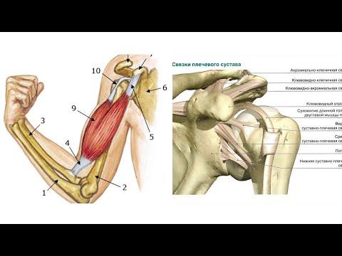 Бодибилдинг болит локоть боль тазобедренном суставе лежании