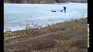 мужик спасает свою собаку! молодец взяла гордость