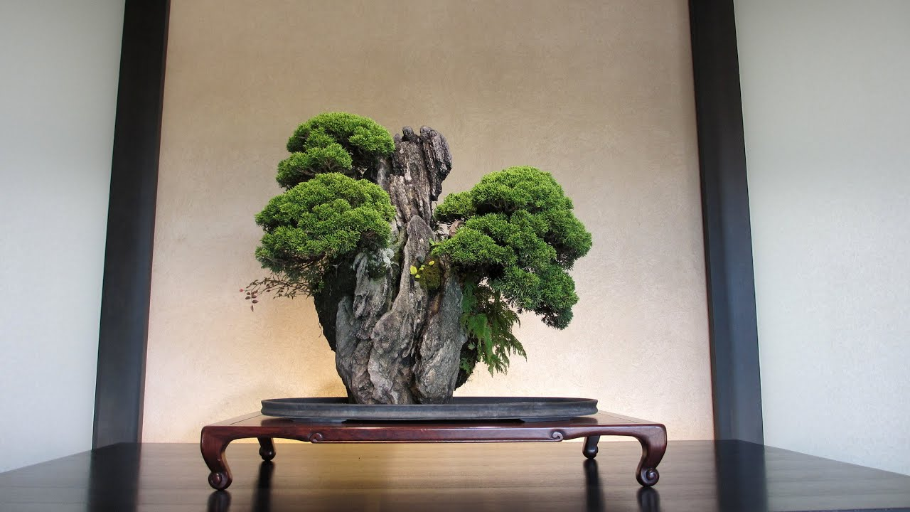 The Forest Of Rainbow Trees World S Most Expensive Bonsai