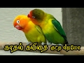 🌹💜❤ Kaadhal Kavithai in tamil {Love Quotes in Tamil} #074 🌹💜❤